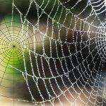 Das Spinnennetz ist ein gutes Beispiel zur Illustration der Symmetriebrechung